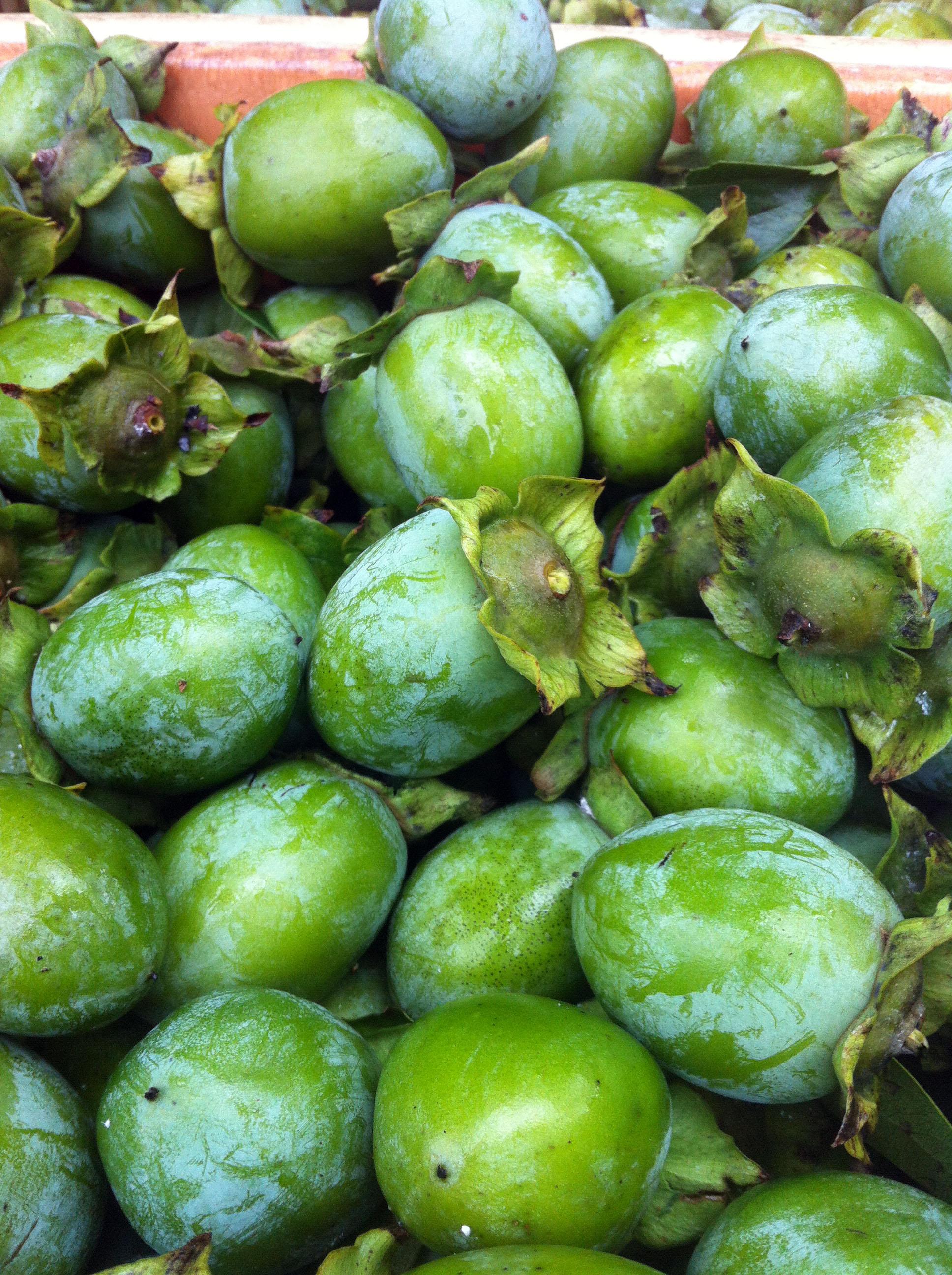 ツネイシみらい財団、日本三大柿渋「備後渋」を守る活動を支援