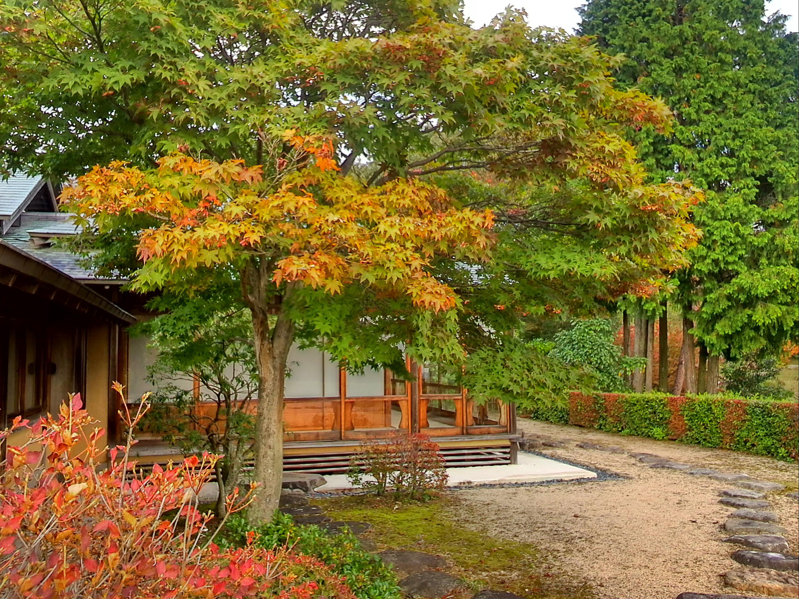 葉が色づきはじめています