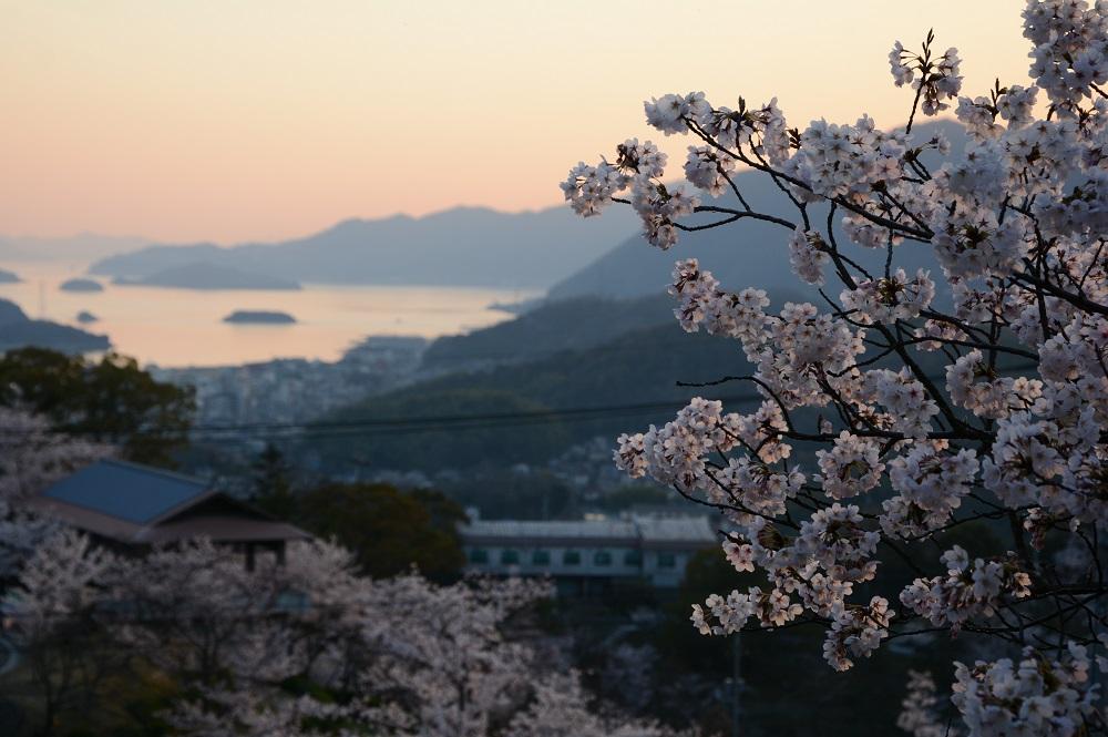 千光寺公園から望む桜と瀬戸内海