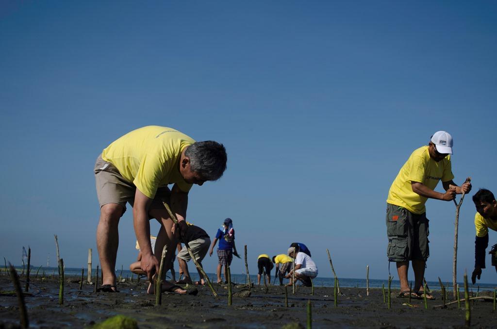 「世界湿地の日」を記念 ツネイシセブ財団が20,000本のマングローブを植樹