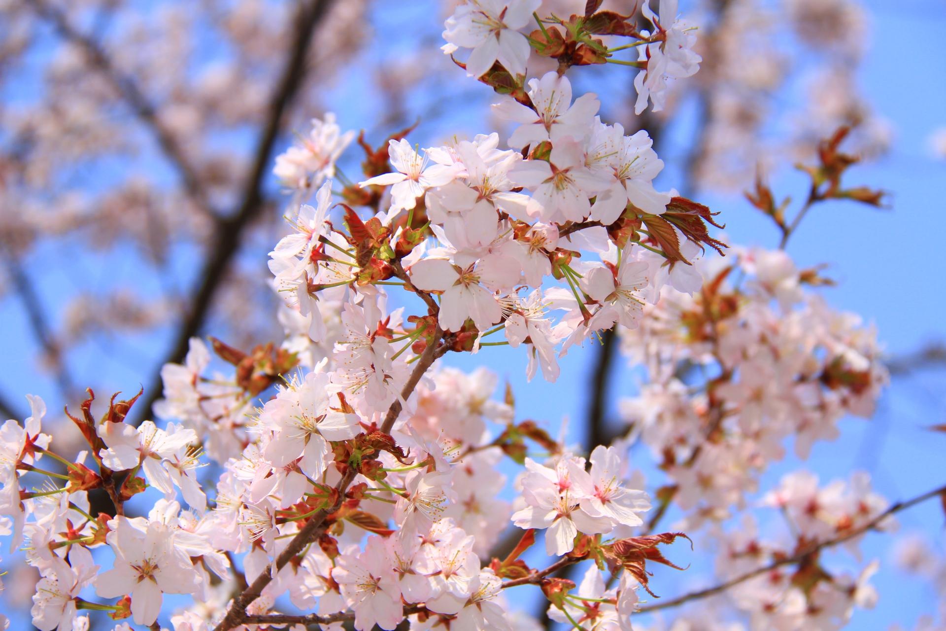 麗らかな春のおもてなしをカタチに─ 瀬戸内海と寛ぐベラビスタ SOBO の花見会席